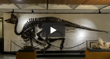 George The Lambeosaurus – Pacific Museum of the Earth